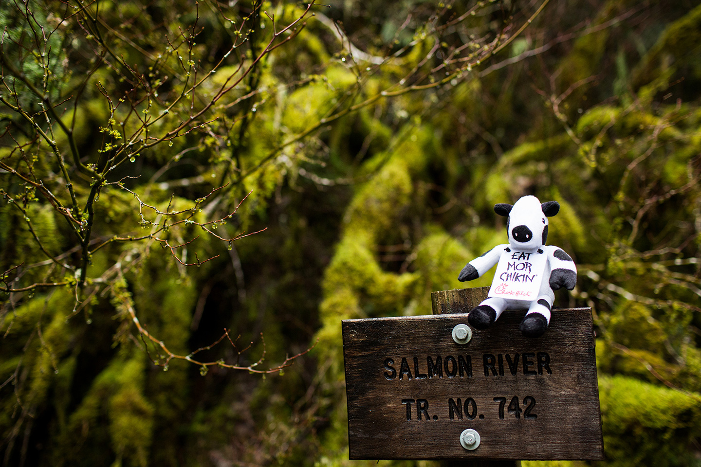 The Salmon River Trail in Mount Hood National Forest